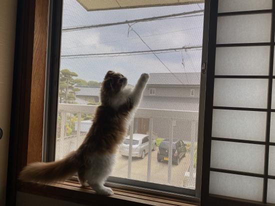 【網戸】可愛らしい愛猫のために